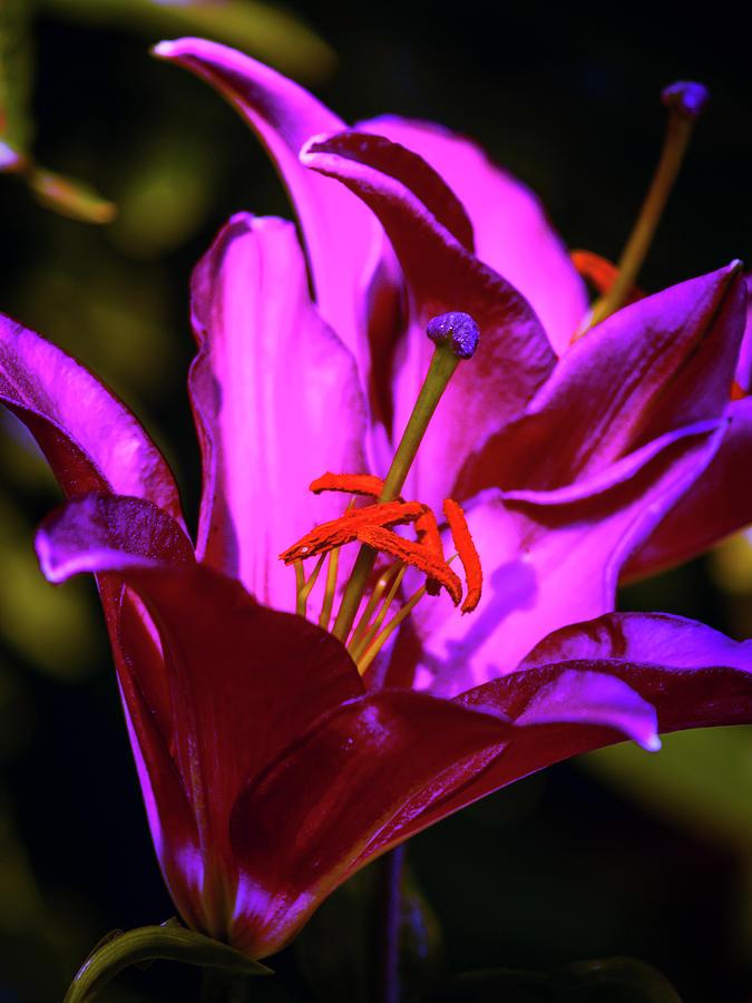 Purple Glow by Stewart Helberg