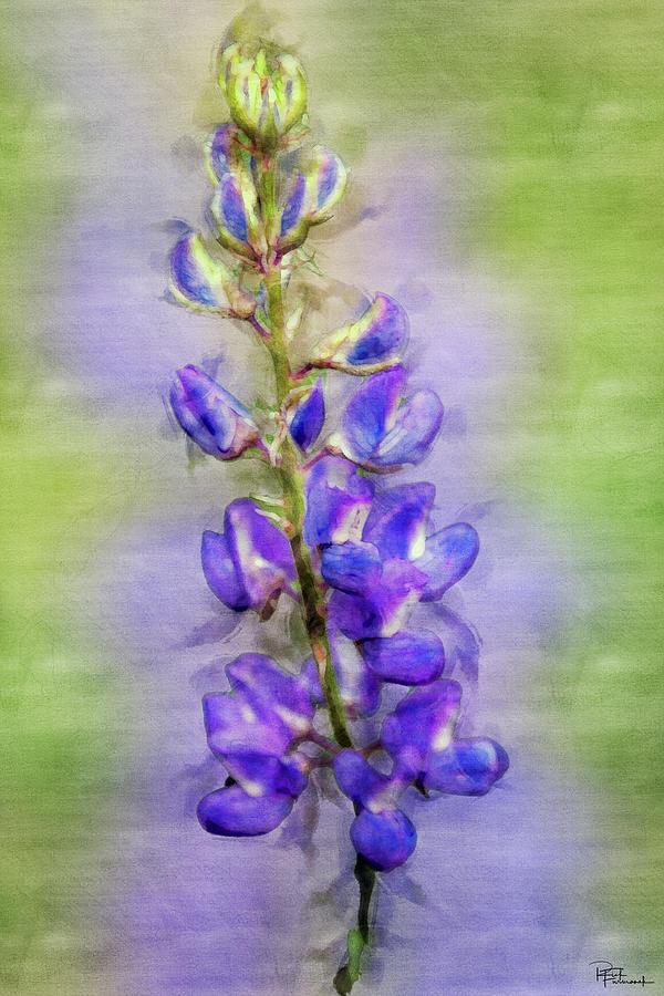 Purple Haze in Digital Watercolor by Rick Furmanek