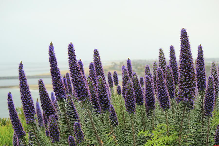 Flowers Photograph - Purple in Sand by Alina Avanesian