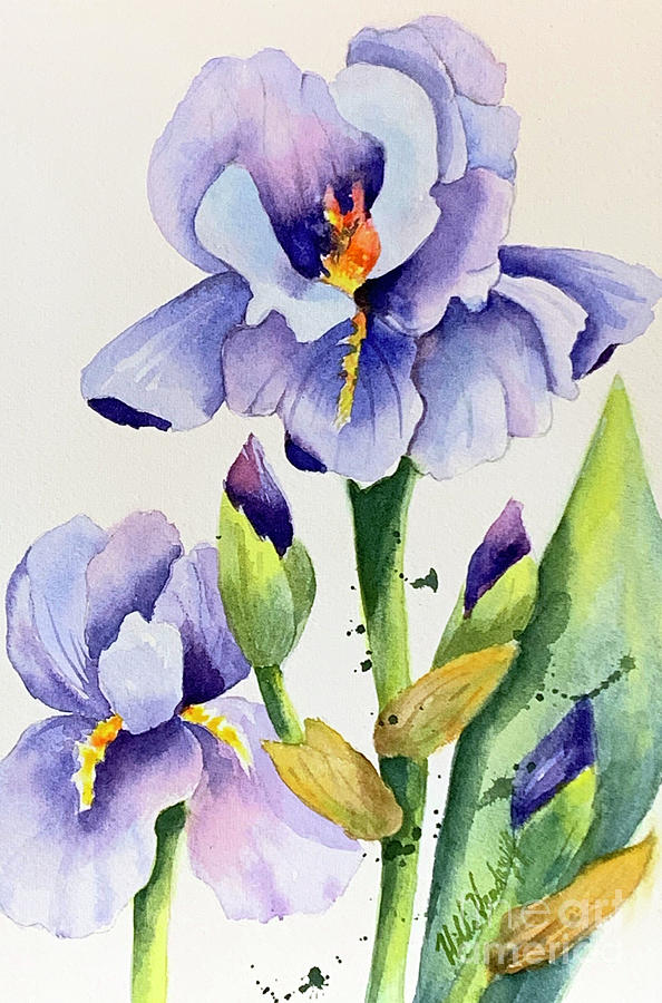 Purple Iris and Buds by Hilda Vandergriff