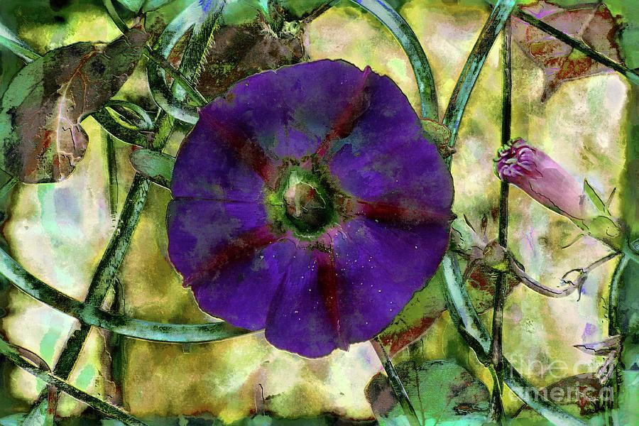 Purple Morning Glory by Jolanta Anna Karolska