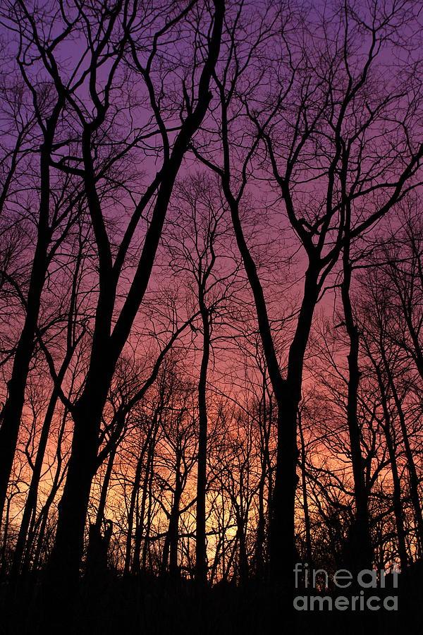 Purple Orange Sky by Paula Guttilla