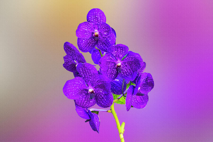 Purple Orchids Digital Painting by Eugene Norris