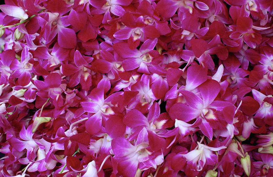 Purple Orchids For Sale At Pak Khlong Photograph by Lonely Planet