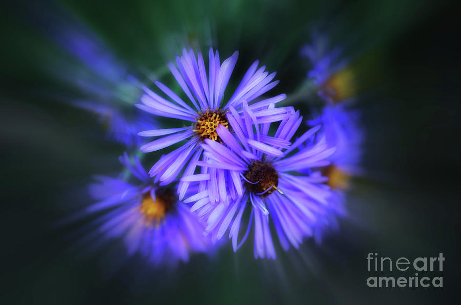 Purple Passion by Elaine Manley
