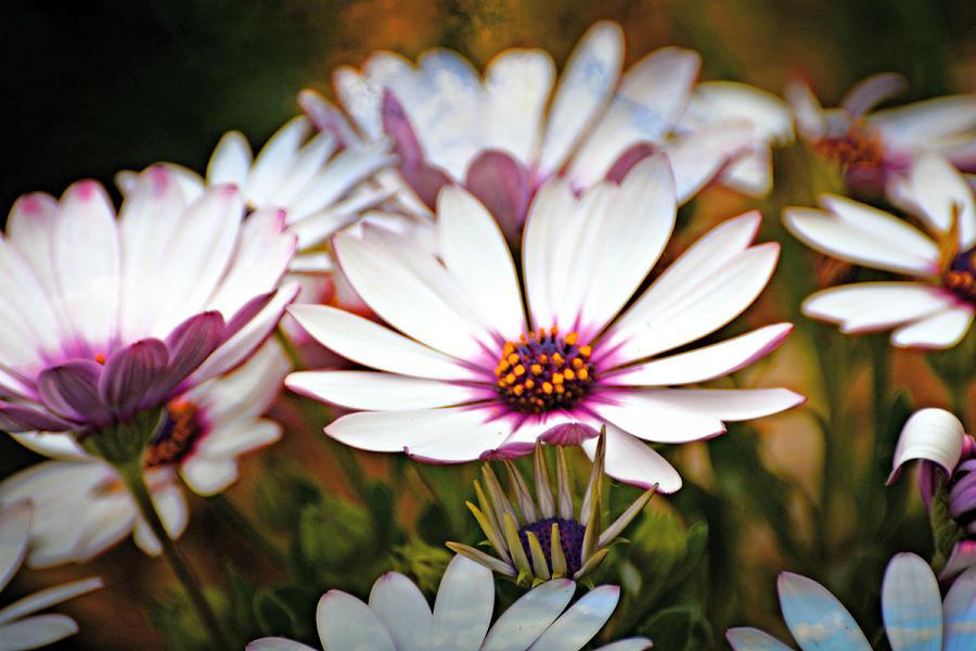 Purple Petals 001 by Marty Koch