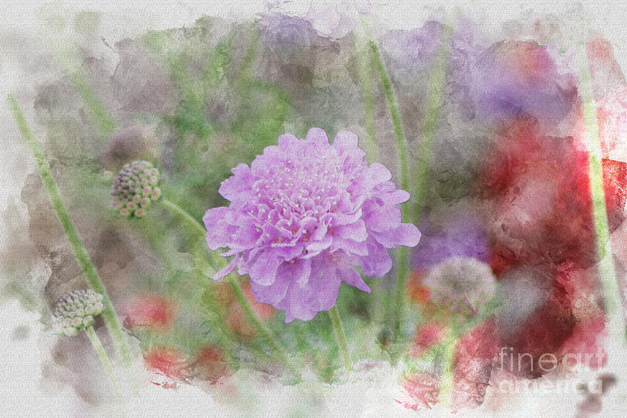 Watercolor Photograph - Purple Pincushion Flower in Digital Watercolor by Colleen Cornelius