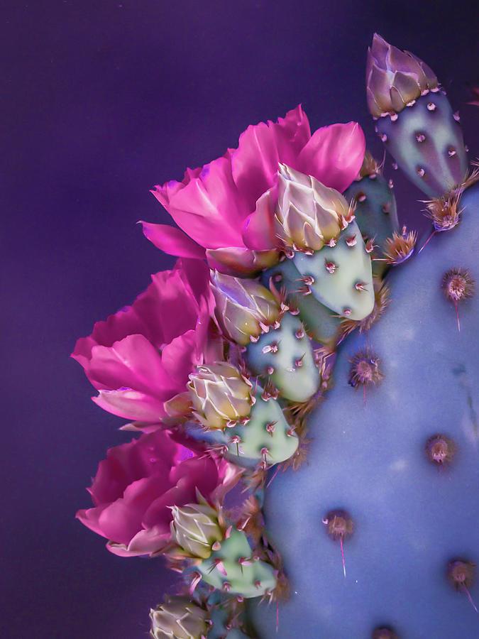 Purple Pink and Prickly by Veronika Countryman