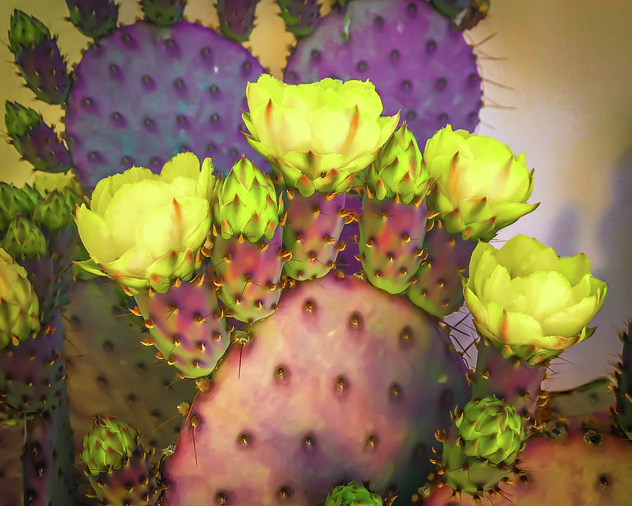 Purple Prickly Pear with Yellow Blooms by Veronika Countryman