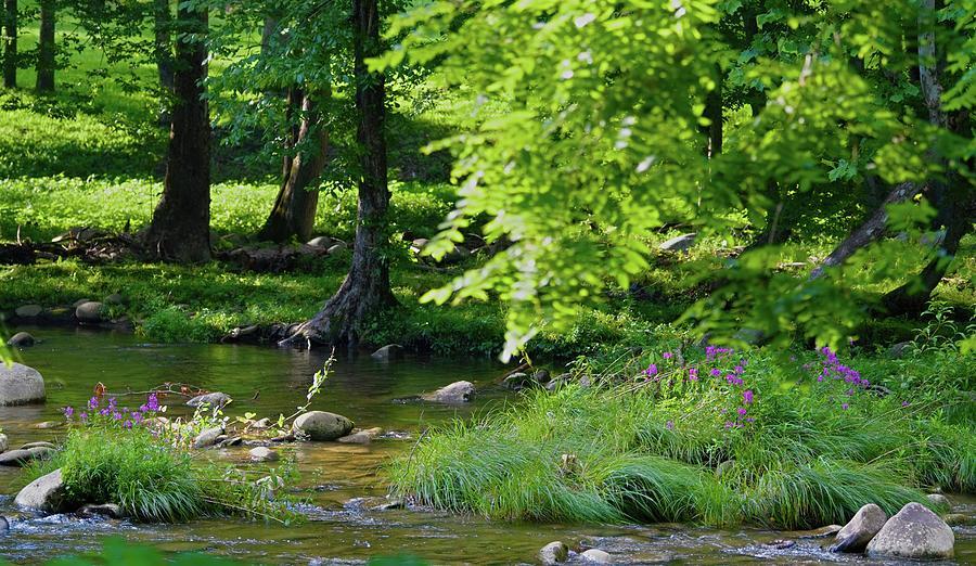Purple Promise Flowers in a Mountain Stream by T Lynn Dodsworth