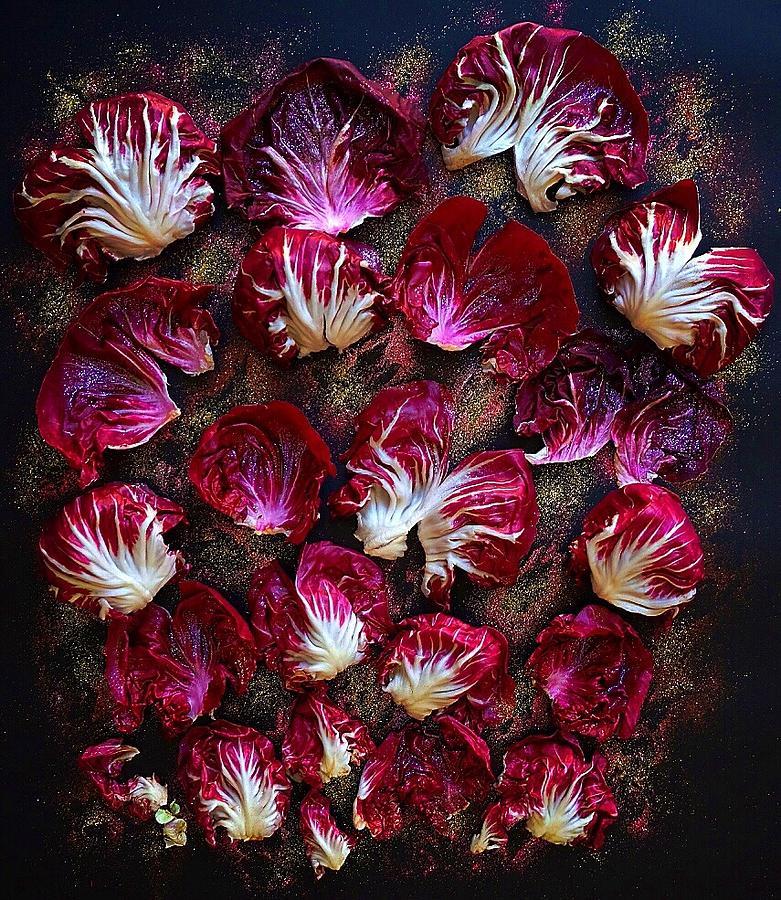 Purple Radicchio by Sarah Phillips