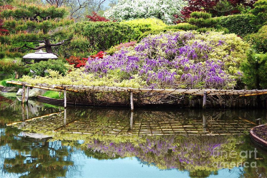 Purple Reflection by Steve Edwards