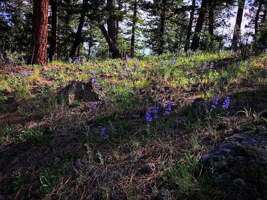 Purple Ridge by Dan Miller