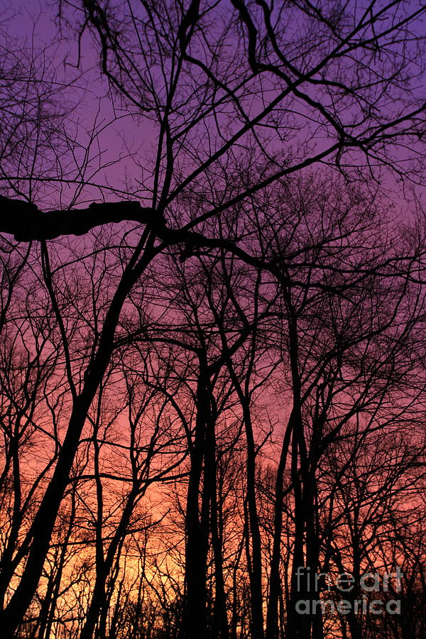 Purple Sky by Paula Guttilla