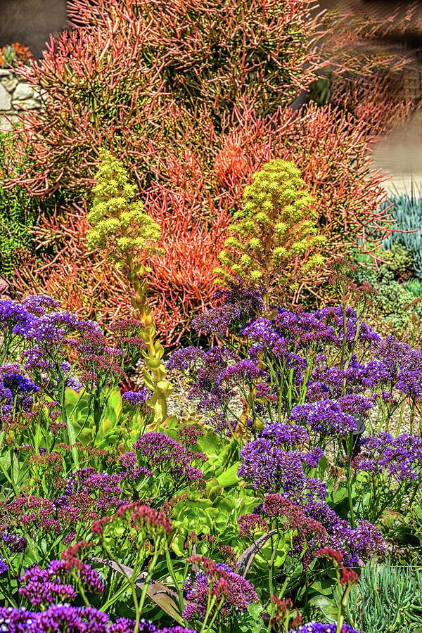 Purple Statice and Yellow Flowering Aeonium Arboreumi 2  by Linda Brody