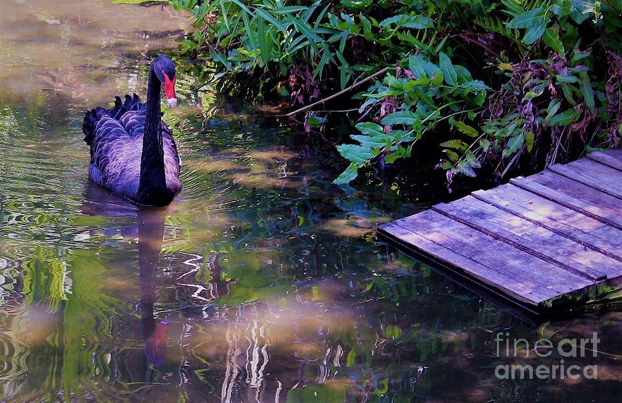 Purple Swan by Mindy Newman