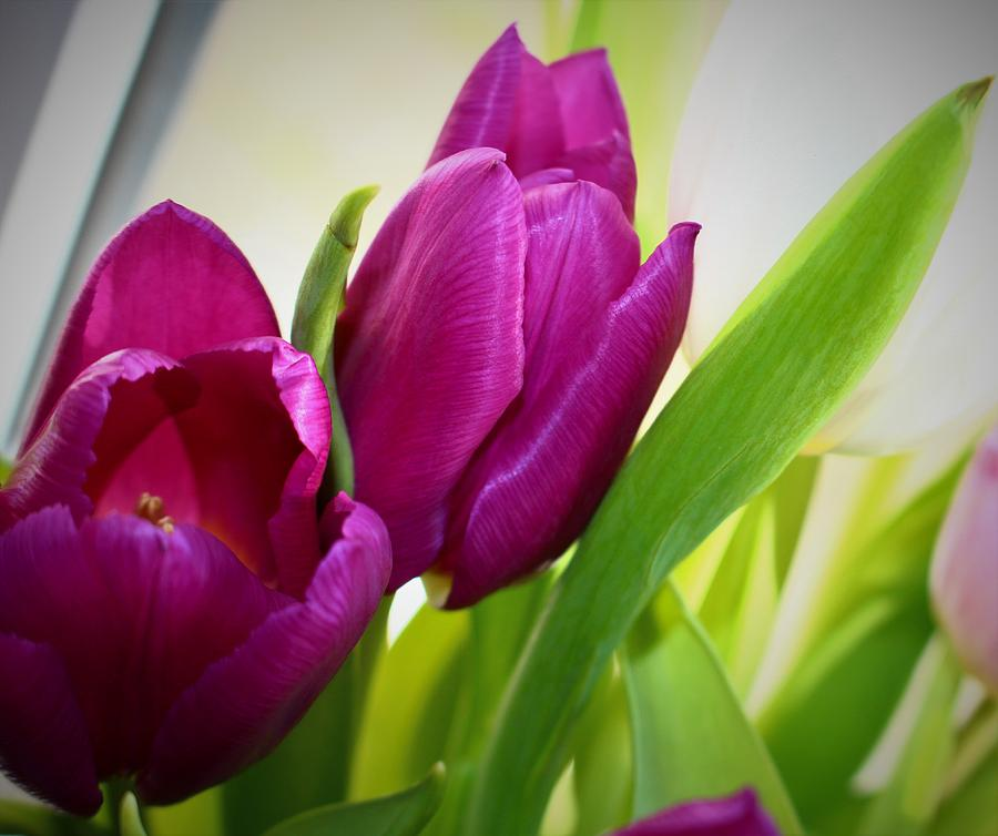 Purple Tulip Duo by Loretta S