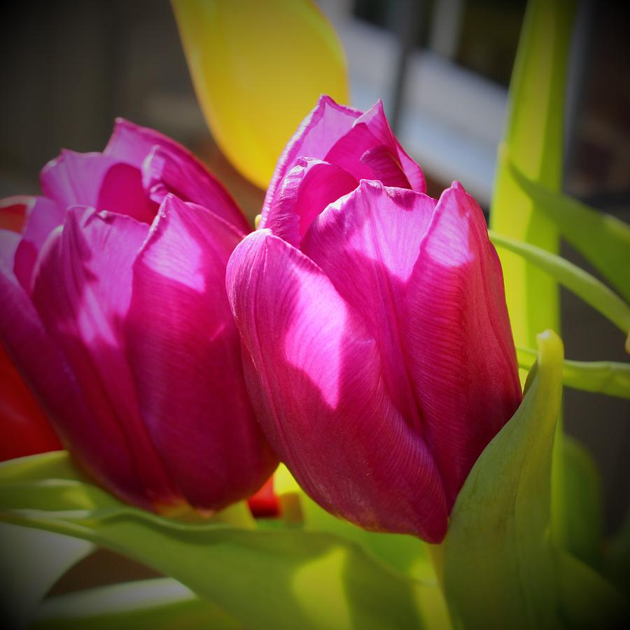 Purple Tulip Love by Loretta S