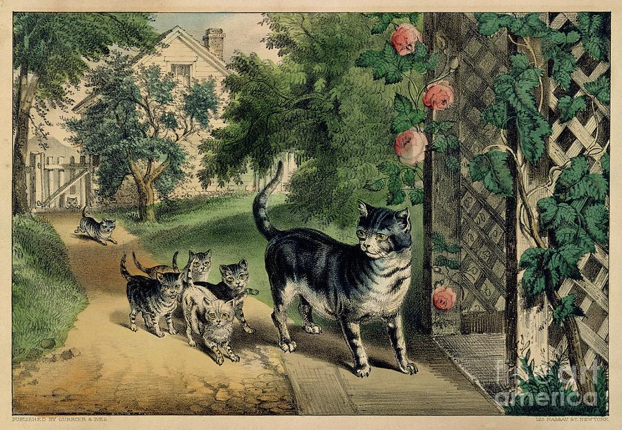 Pussys Return Drawing by Heritage Images