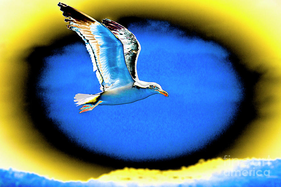 Psychodelic Seagull by Shawn Jeffries
