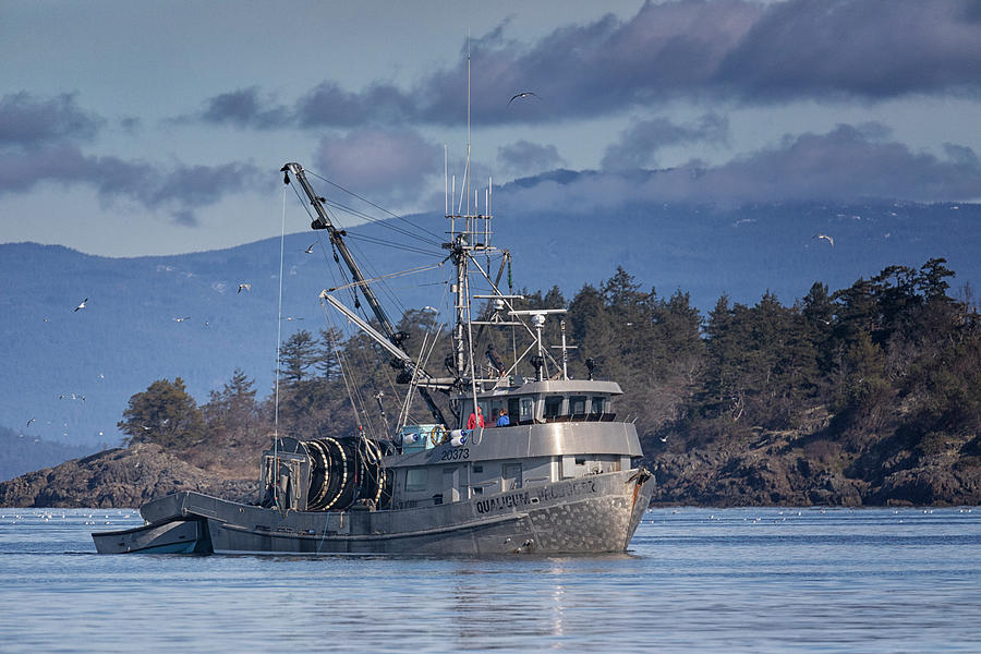 Qualicum Producer In Nw Bay Photograph