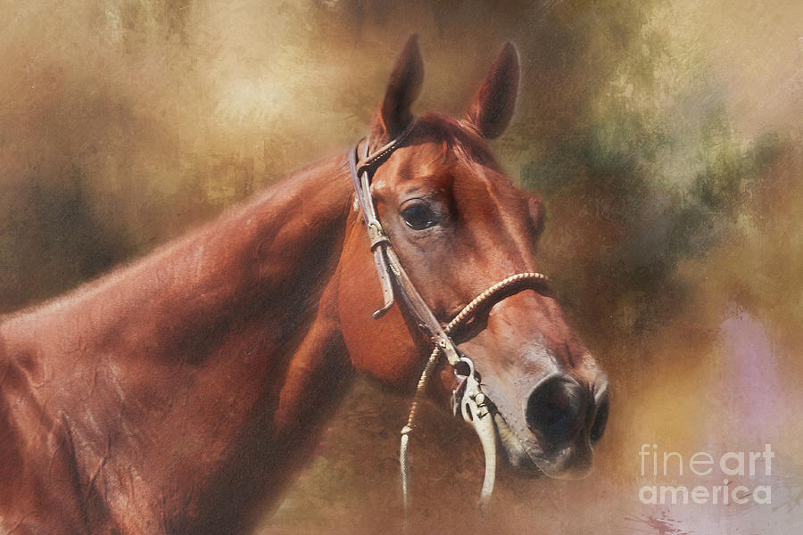 Quarter Horse Portrait Photograph