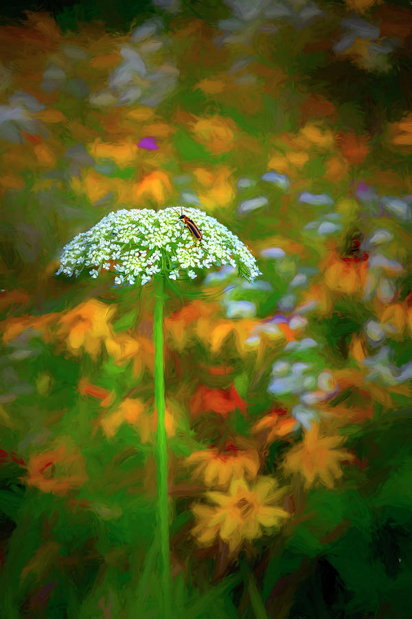 Queen Anne's Lace Painting by Debra and Dave Vanderlaan