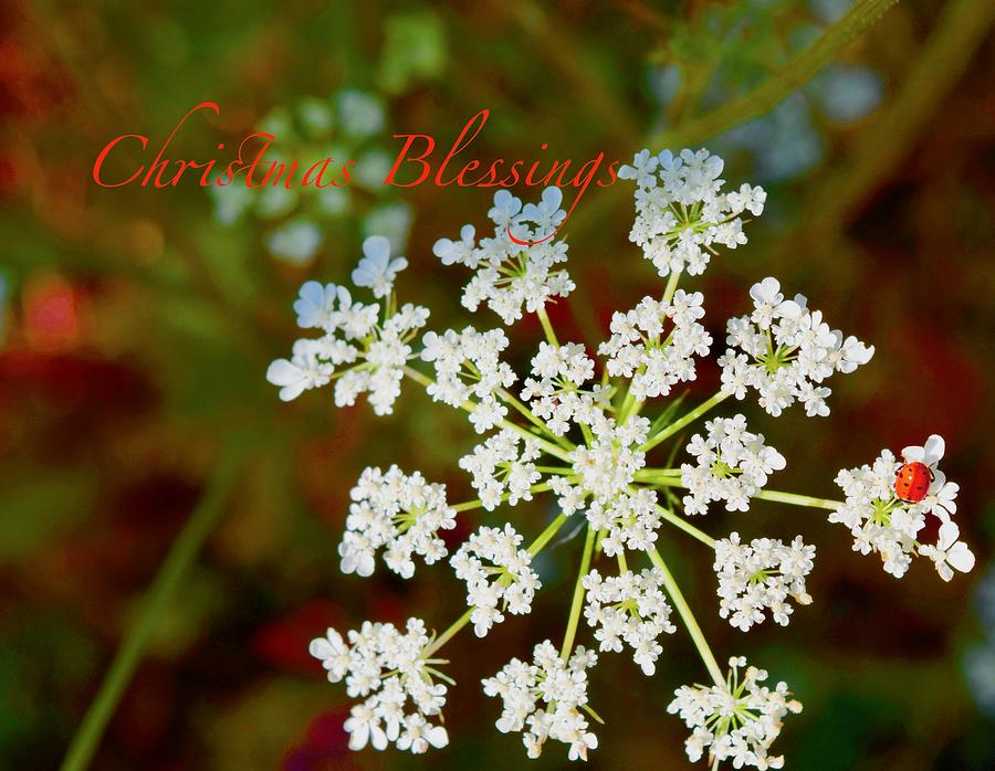 Queen Anne's Lace Snowflake Blessings by Debra Grace Addison