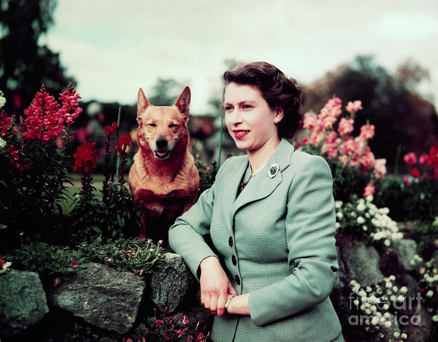 Queen Elizabeth In Garden With Dog Photograph by Bettmann