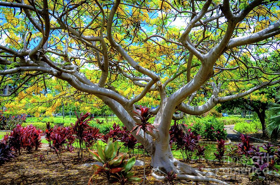 Queen Kapiolani Park - Trees, Plants, and Flowers - Tropical by D Davila
