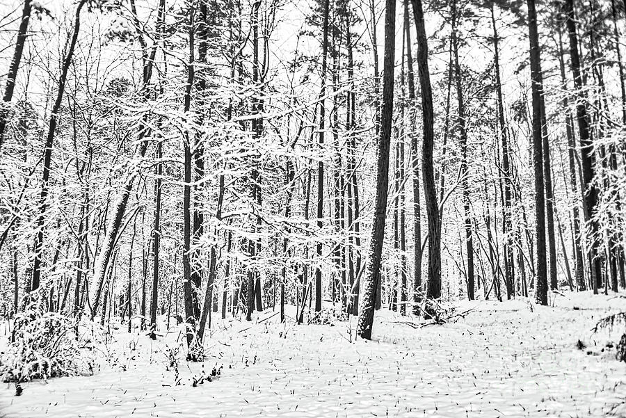 Quiet Snow by James Foshee