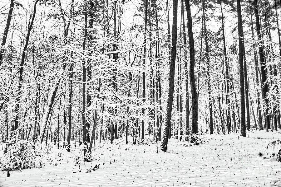 Snow Photograph - Quiet Snow by James Foshee