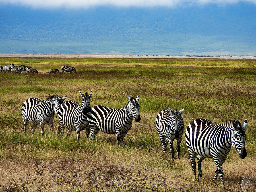 Quintessential Africa by Elie Wolf