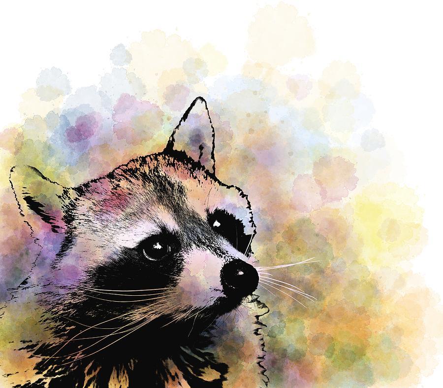 Raccoon 23 by Lucie Dumas