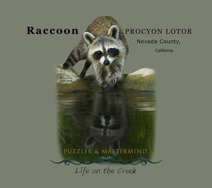 Raccoon Puzzler and Mastermind by Lisa Redfern