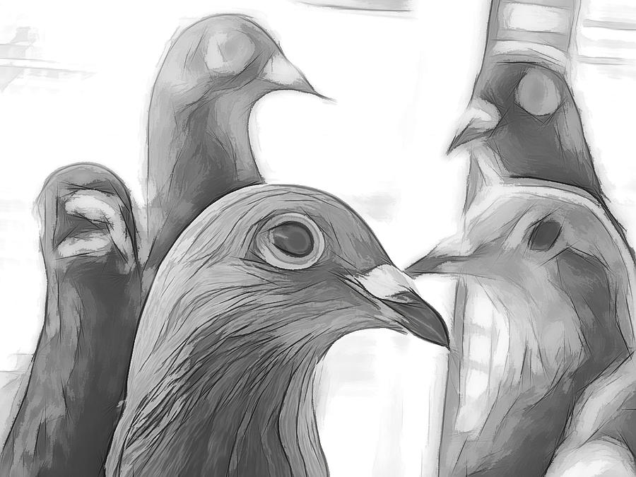 Racing Pigeons Group Black And White by Don Northup
