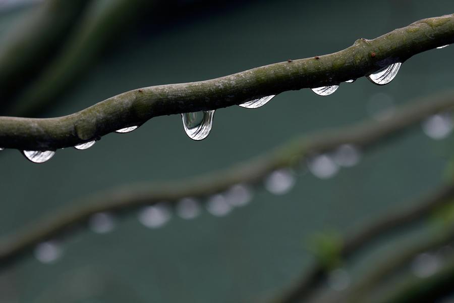 Rain Branch Photograph by Photography By Gordana Adamovic Mladenovic