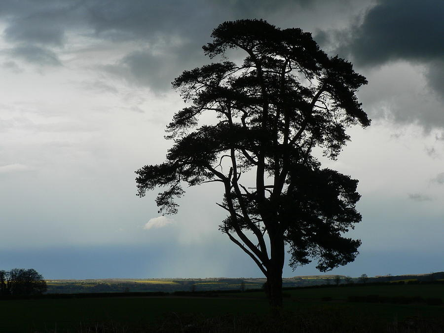 Tree Photograph - Rain Clouds Coming by Lynne Iddon