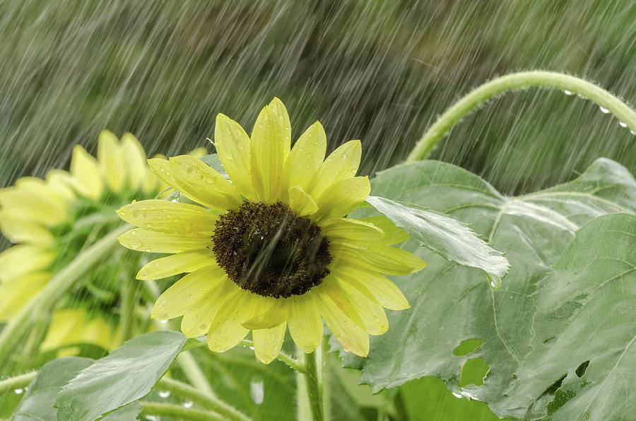 Rain Down On Me Photograph