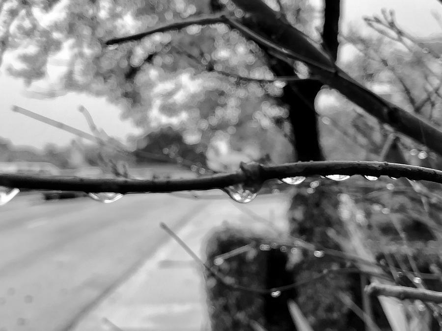 Rain Drops by Dan Twomey