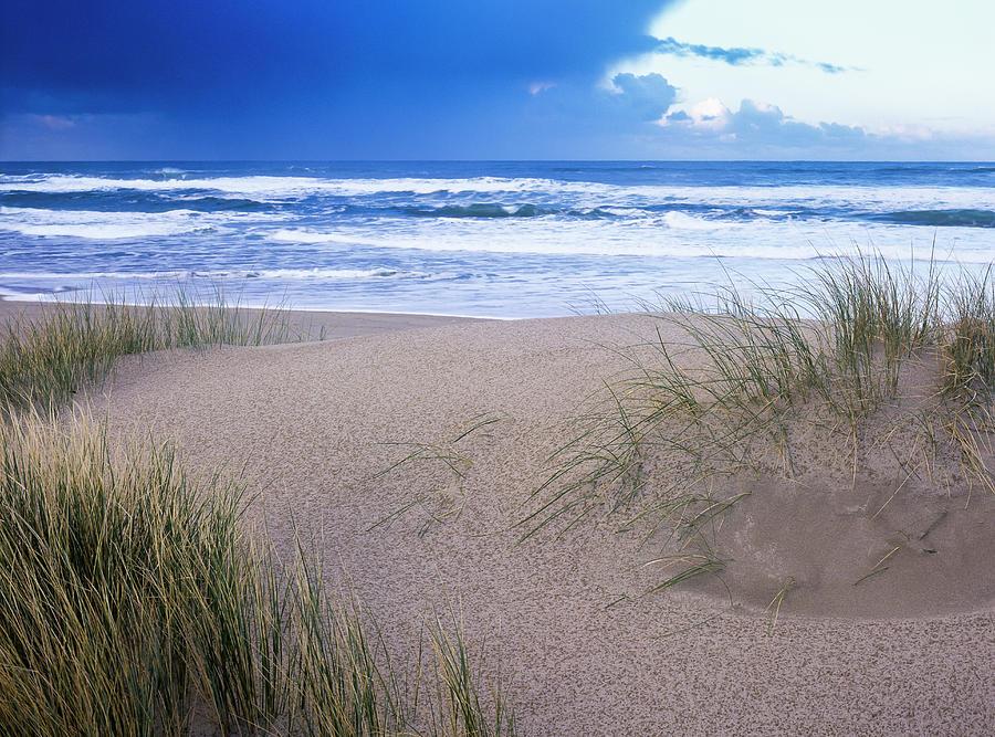 Rain on a Dune by Robert Potts