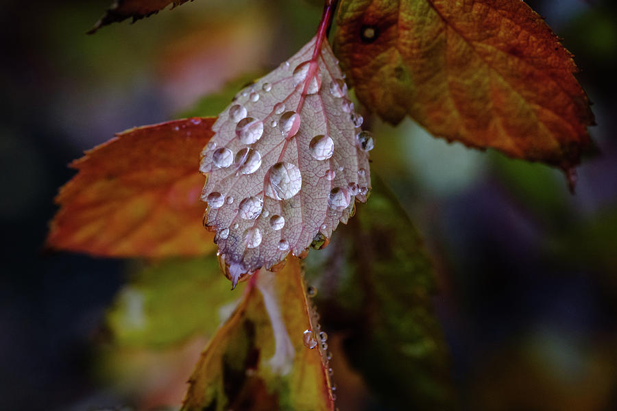Rain on December Leaves by Glenn DiPaola
