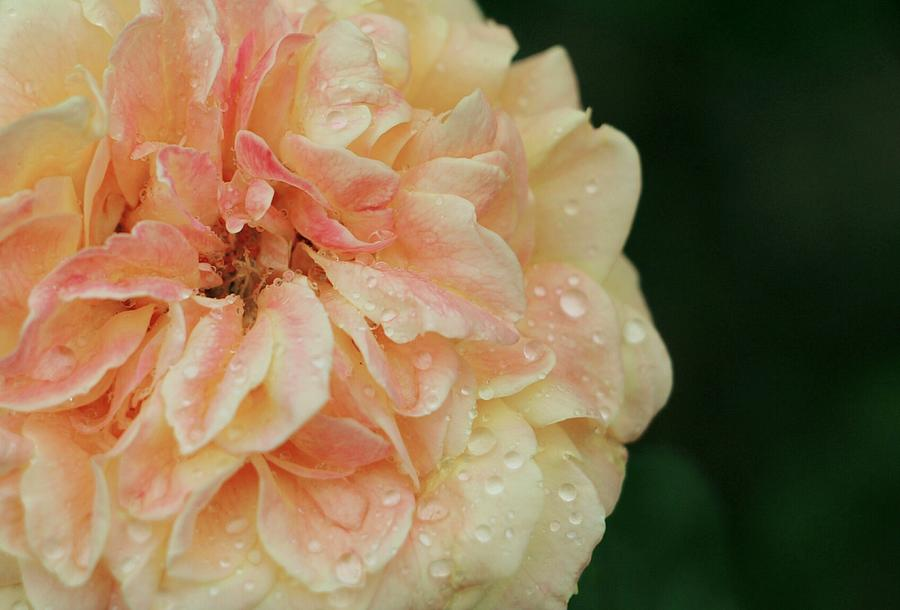 Rain Softly On Me by The Art Of Marilyn Ridoutt-Greene