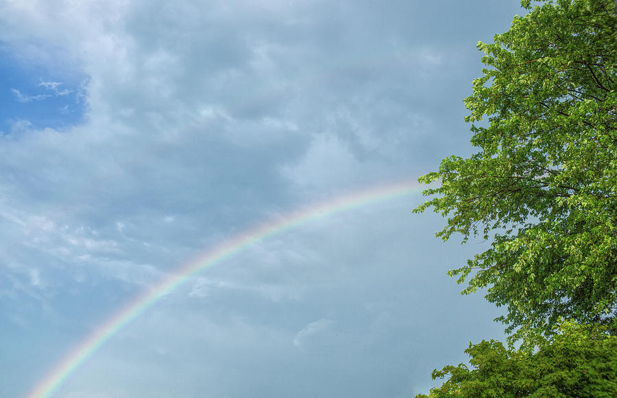 Rainbow and a Tree by Jason Fink
