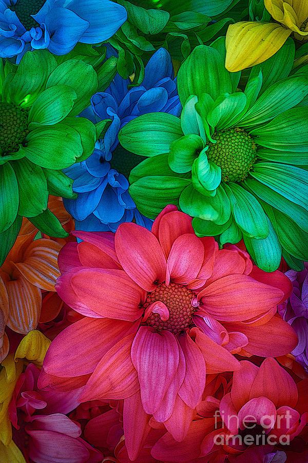 Rainbow Daisy 2 by Sonya Lang