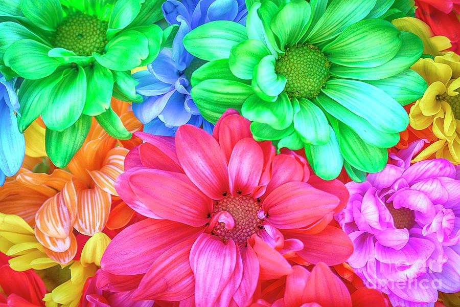 Rainbow Daisy by Sonya Lang