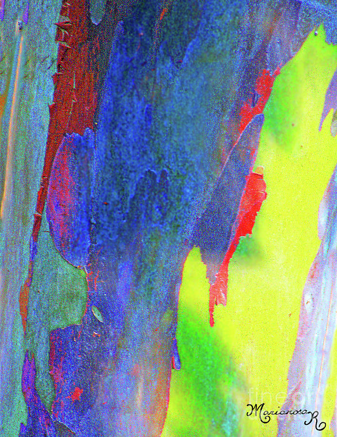 Rainbow Eucalyptus  by Mariarosa Rockefeller