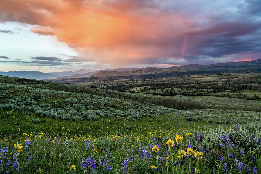 Rainbow Of Colors by Ann Skelton