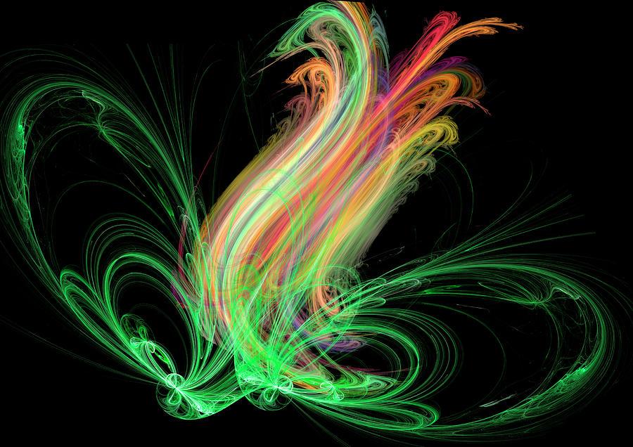 Rainbow Tulip by ILIA -