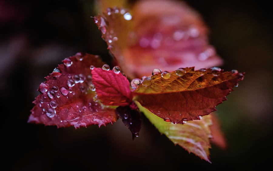 Raindrops 4 Leaves by Glenn DiPaola